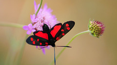 butterfly on flower!
