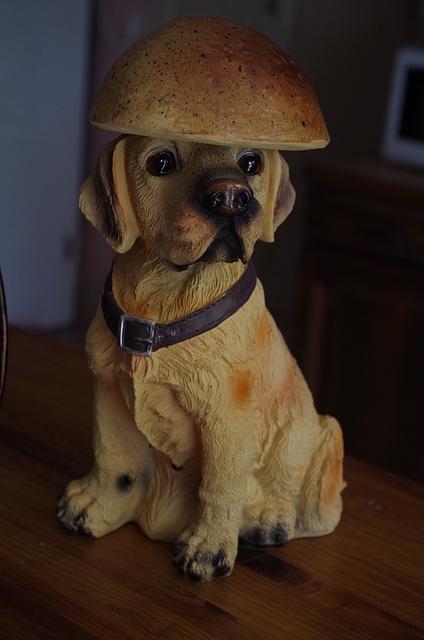 chien chapeauté