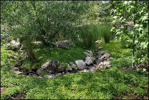 Jardin chinois  (4)