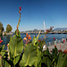 Pont des Bergues et Promenade du Lac (6 images)