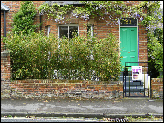 wisteria in art weeks