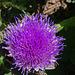 fleur d'artichaud