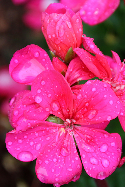 Rainy day joys