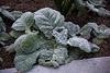 20140424 1737VRAw [D~BI] Botanischer Garten