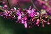 20140424 1724VRAw [D~BI] Botanischer Garten