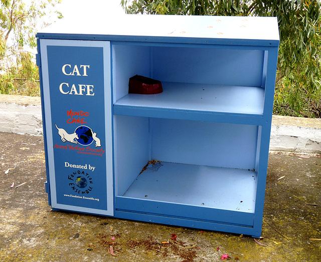 'Cat Cafe'