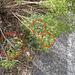 EsMj067 Hyles dahlii Location