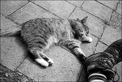 Katze geht immer...