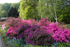 20140424 1687VRAw [D~BI] Rhododendron, Botanischer Garten