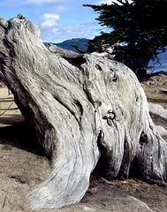 Ghost Cypress