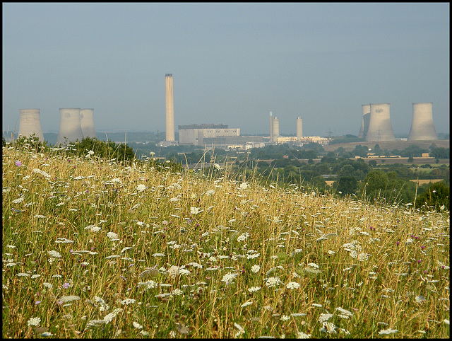 flower of Didcot