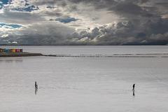 Scheidung im Wattenmeer? - Divorce in the Wadden Sea? ;-)