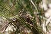 2/3 nest? IMG 3564