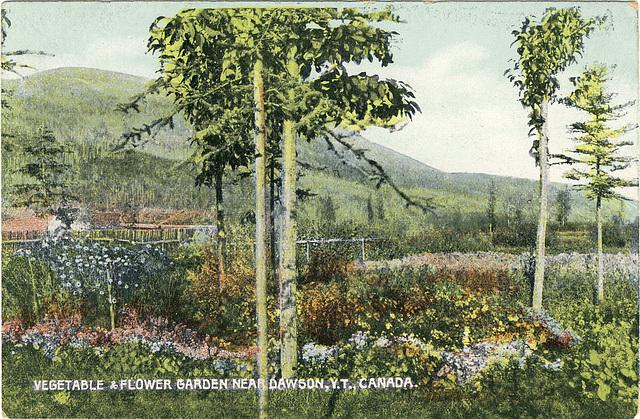 Vegetable & Flower Garden near Dawson, Y.T., Canada.