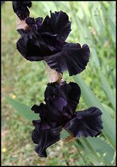 Iris Anvil of Darkness- Aussi sombre que la nuit