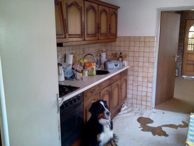Bonnie bewaakt de oude keuken (9-6-2014)