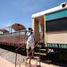 0504 121042 Verde Canyon Railroad