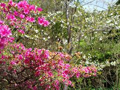 The joys of spring n Rotorua