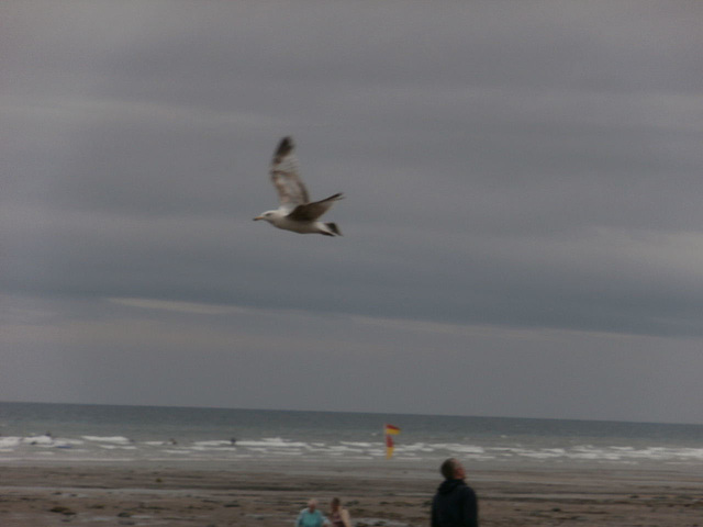 Just very windy and the seagulls were having fun