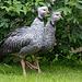 20140508 2980VRAw [D~LIP] Halsband-Wehrvogel (Chauna torquata), Vogelpark Detmold-Heiligenkirchen