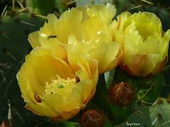 Trois fleurs et trois insectes