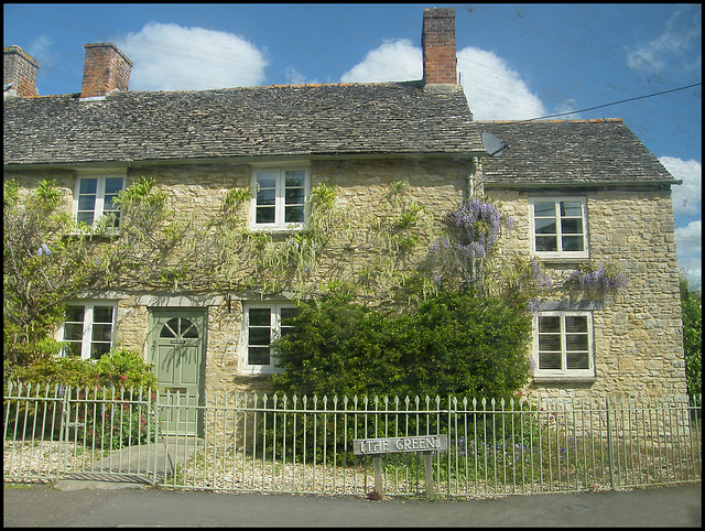 Tackley wisteria