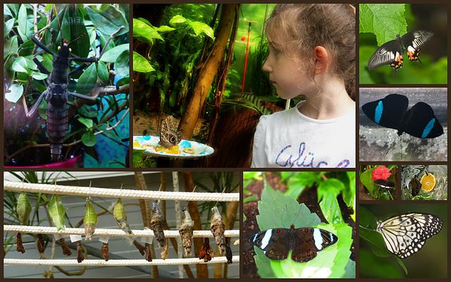 Insektenmuseum und Schmetterlingsfarm in Steinhude