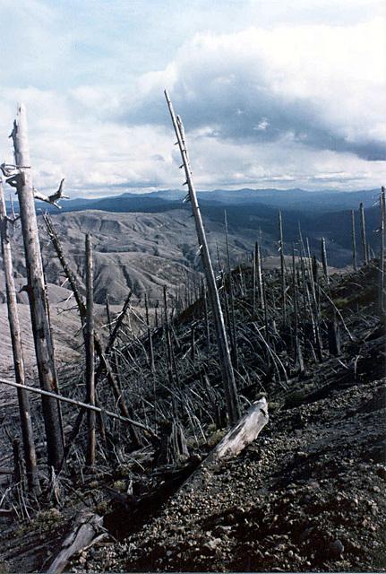 trees_devastated_area7_adj