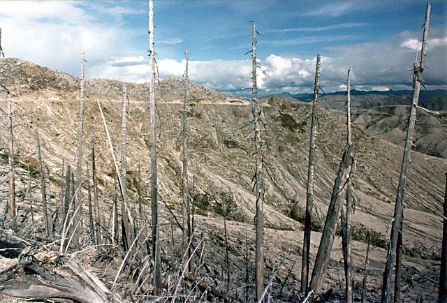 trees_devastated_area5_adj