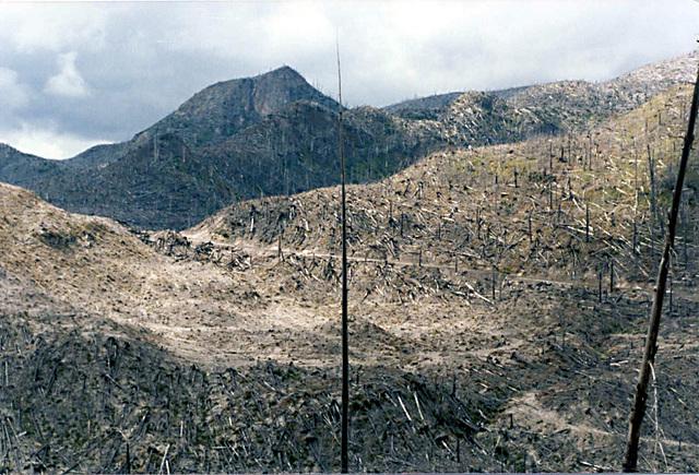 trees_devastated_area3_adj