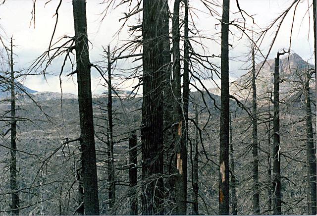 trees_devastated_area2_adj