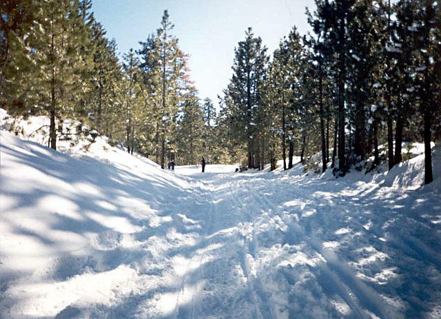 snowy_trail_adj