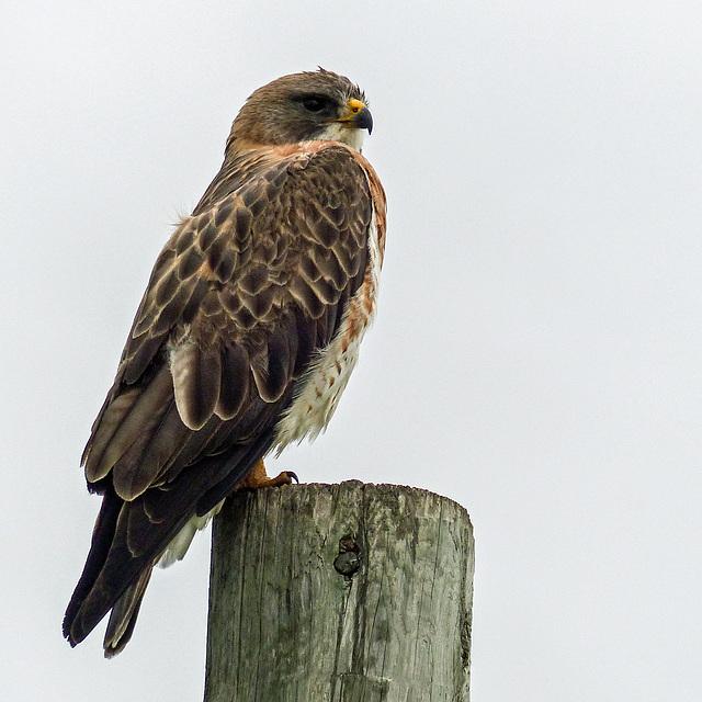 Avian beauty