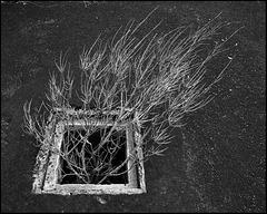 underground_growth
