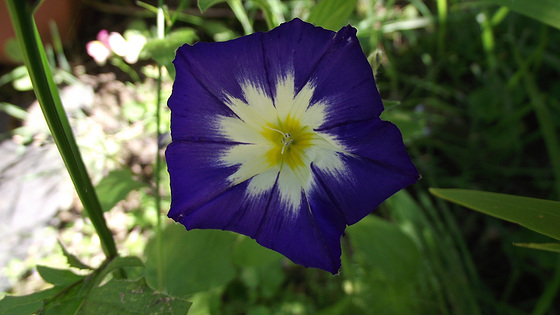 Another lovely blue wildflower