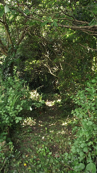 Mickey has cut away the start of a path through the shrubbery