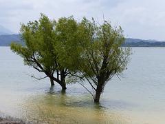 Wasserbäume!