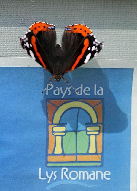 fil(et) à papillons 34150621.b154b476.640