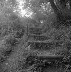 Log steps on the trail