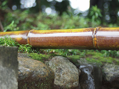 Wet bamboo bar
