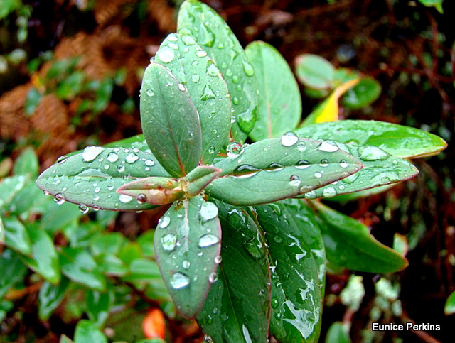 Raindrops on Leaves.