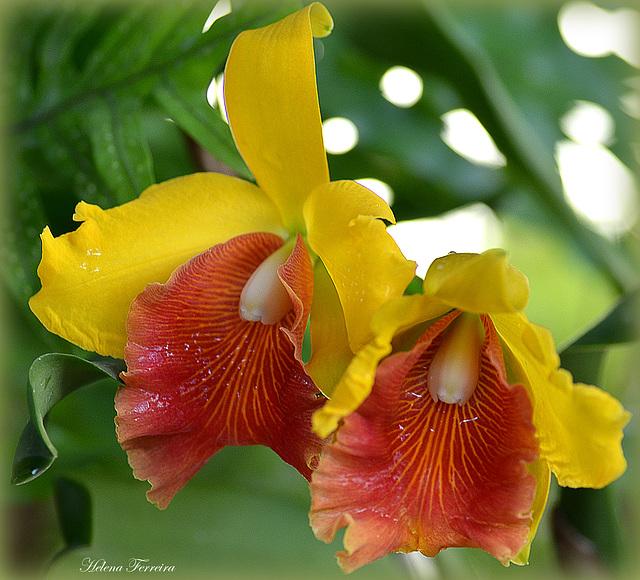 ~ Orchids in my garden ~