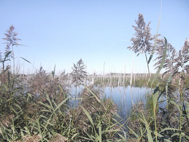 Écosystème du Québec / Quebec ecosystem.