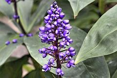 Purple Bromeliad – Botanical Garden, Montréal, Québec