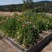 Garden Overview: North-East Corner
