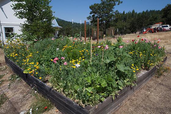 Garden Overview: South-East Corner