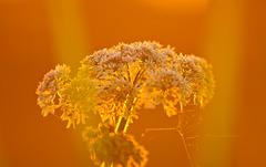 Sun & Flower