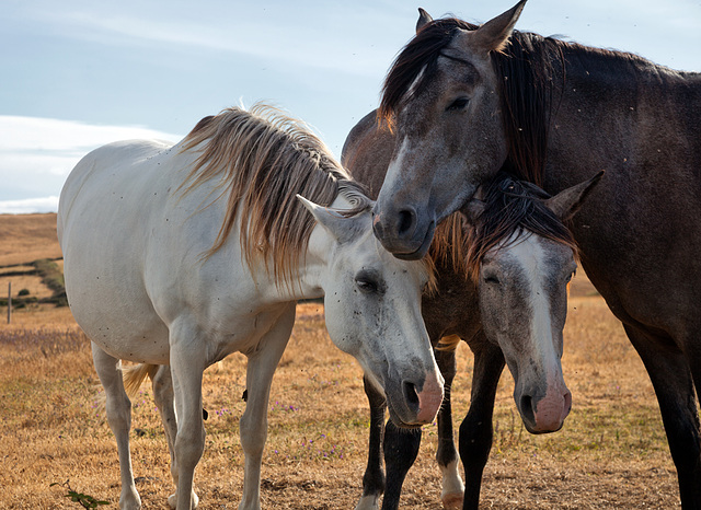 3_horses