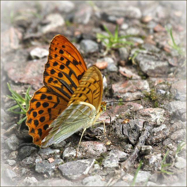fil(et) à papillons 34191787.af368c81.640