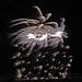 DHS Fireworks July 5 (0084)